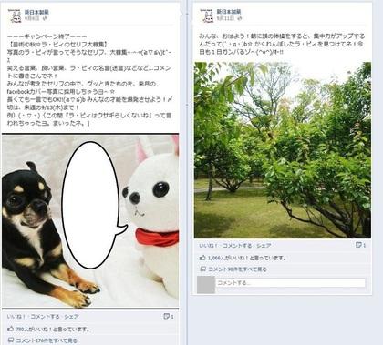 facebook 活用 事例 プロモーション 新日本製薬 かくれんぼ