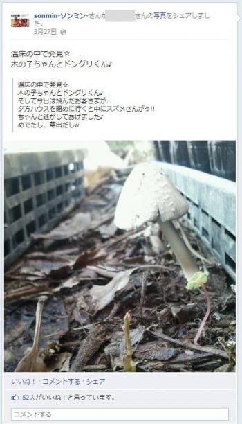 facebook 活用 事例 プロモーション sonmin-ソンミン-/フリーダムビレッジ株式会社 スタンス③