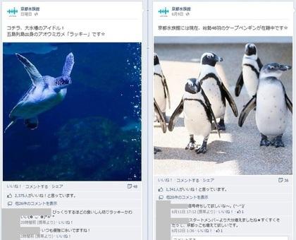 Facebook 活用 事例 プロモーション 京都水族館/オリックス水族館株式会社